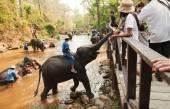 Elephants in Maesa Elephant Camp — Stock Photo