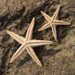 Two starfishes on rock — Stock Photo #63417665