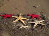 Starfishes on rock close-up — Стоковое фото