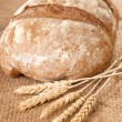 Fresh baked bread with wheat — Stock Photo #63427213