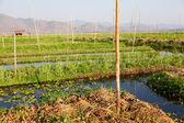 Floating gardens in Inle Lake, Myanmar — Stock Photo