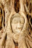Head of Buddha under fig tree — 图库照片