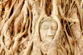 Cabeça de Buda sob a árvore de figo — Fotografia Stock