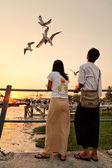 Feeding seagulls on pier, Yangon — Stock Photo