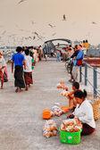 Feeding seagulls on pier, Yangon — Zdjęcie stockowe