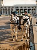 Man in horse cart in Vienna — Stock Photo