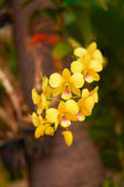 Orchid in Thailand Orchid Farm — ストック写真