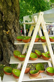 Green clay pottery plates at the fair of artisans in Riga — Stock Photo