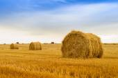 Straw bale on the field after harvest. Focus foreground — Stock Photo