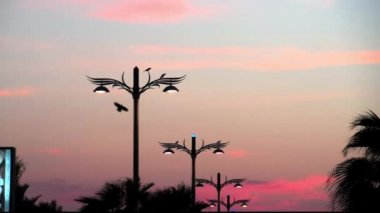 Sunset video on Palm Jumeirah man-made island, Dubai, UAE — Stock Video