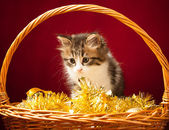 Young cat playing with christmas ornaments — Stockfoto