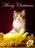 Young cat playing with christmas ornaments — Foto Stock