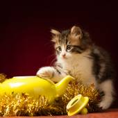 Young cat playing with christmas ornaments — Stock fotografie