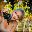 Beautiful young blonde woamn harvesting grapes in vineyard — Stock Photo #56475425