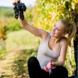 Beautiful young blonde woamn harvesting grapes in vineyard — Stock Photo #57115421