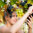 Beautiful young blonde woamn harvesting grapes in vineyard — Stock Photo #57647319