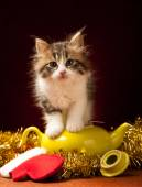 Young cat playing with christmas ornaments — Stock Photo