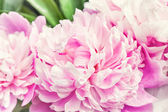 Defocus beautiful pink flowers — Stock Photo