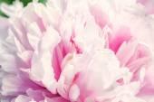 Defocus beautiful pink flowers. — Stock Photo