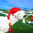 White new year goat on a meadow — Stock Photo #58134219