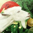 White goat decorates Christmas tree — Stock Photo #58136281