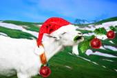 White new year goat on a meadow — Stock Photo