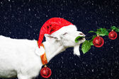 White new year goat in red santa  hat — Stock Photo
