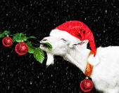 White new year goat in santa claus hat — Stock Photo