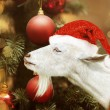 White goat holding in santa claus hat — Stock Photo #58143295