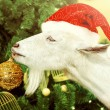 White goat decorates Christmas tree — Stock Photo #58143299
