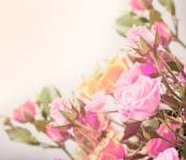 Roses on tender background with color filters — Stock Photo