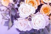 Defocus blur Pastel flowers — Stock Photo