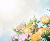 Defocus blur pastel flowers - roses — Stock Photo