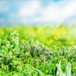 Flowers and green grass on meadow — Foto de Stock   #64833889