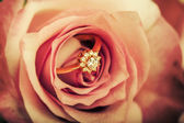 Diamond engagement ring in rose flower — Stock Photo