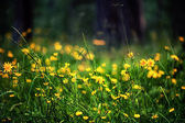 Defocus view of meadow with bright yellow flowers — Stock Photo
