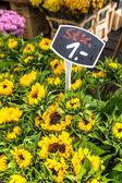 Sunflowers at the flower market on the Amsterdam street  — Stockfoto
