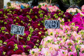Colorful bouquets of dahlias flowers at market in Copenhagen, Denmark. — Stock Photo