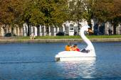 White swan in Sortedams Soe in Copenhagen, Denmark. — Foto Stock