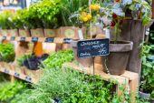 Different fresh green herbs on market outdoor summer in Copenhagen, Denmark. — Stok fotoğraf