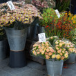 Flower stand in the center of Copenhagen, Denmark. — Stock Photo #53034495