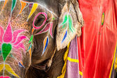 Elephant. India, Jaipur, state of Rajasthan.  — Stock Photo