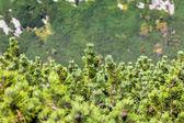 View of pine tree Tatra Mountains from hiking trail. Poland. Europe. — Stock Photo