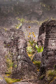 A very rare endemic plants on the plateau of Roraima - Venezuela — Stock Photo