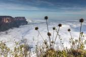 The view from the plateau of Roraima on the Grand Sabana - Venezuela, Latin America — Stock Photo