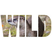 Word WILD European Otter in nature.  — Stock Photo