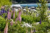 Majestueuze berg met llupins bloeien, Lake Tekapo, Nieuw-Zeeland — Stockfoto