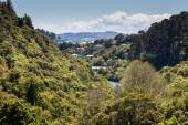 The New Zealand native bush and lake — Stock Photo