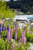 Majestic mountain with llupins blooming, Lake Tekapo, New Zealand  — Stock fotografie