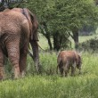 Mother and baby african elephants walking in savannah in the Tar — Stock Photo #63484705